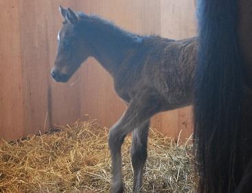 2・出産・馬房で