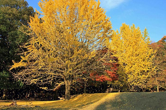 101201a奈良公園