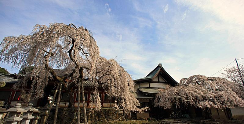 110407氷室神社