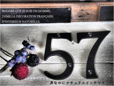341.jpg