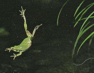frog-image2.jpg