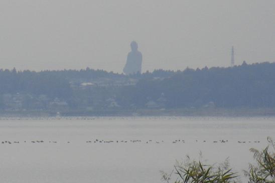 20131102霞ヶ浦 (4)