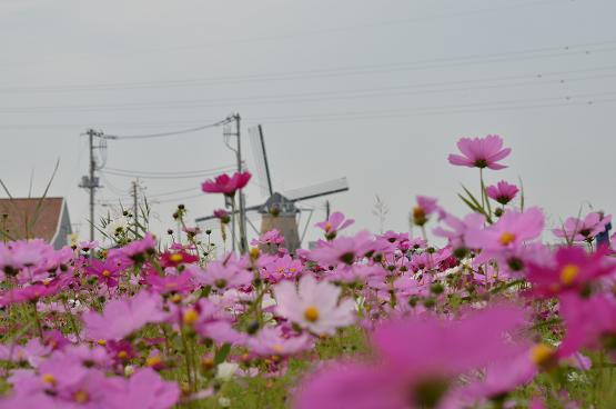 20131103印旛沼B (18)