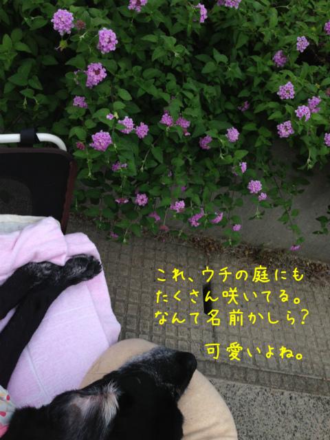 散歩風景 (4)