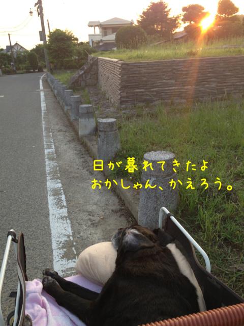 散歩風景 (5)