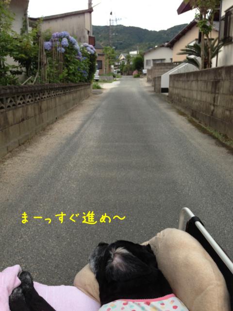 散歩風景 (8)