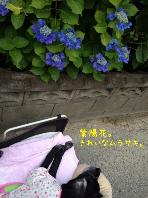 散歩風景 (9)