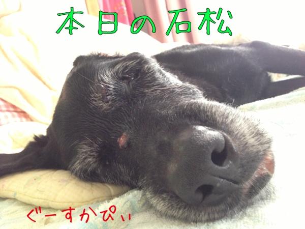 fc2blog_20130622145752a3c.jpg