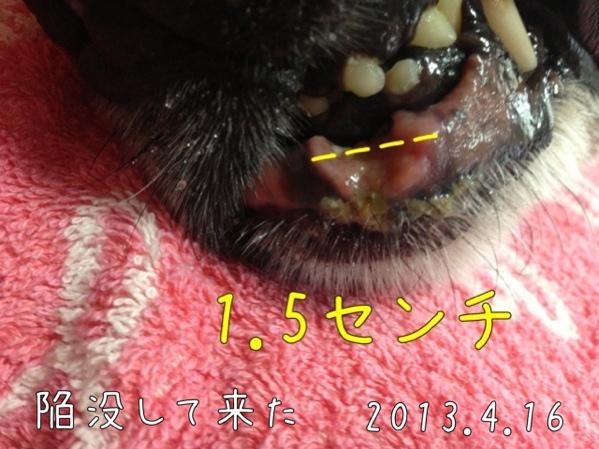 fc2blog_20130920141316e64.jpg