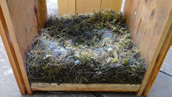 巣箱の中2