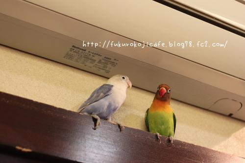プリ&リア1