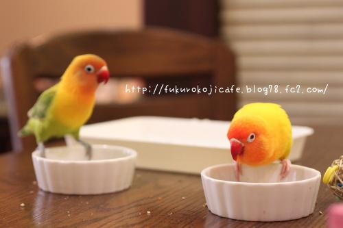 お食事中1