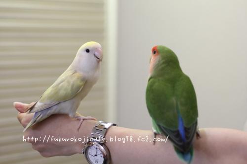 きなこ&ティコさん