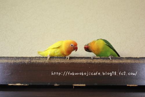 プリ&ミル1