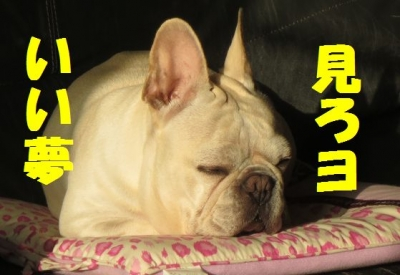 いい夢iiy