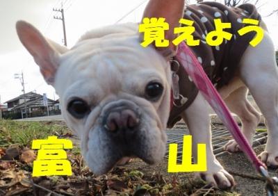 富山toy