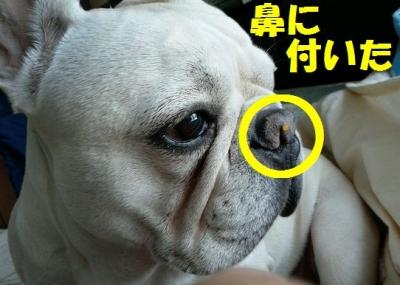 鼻にhan