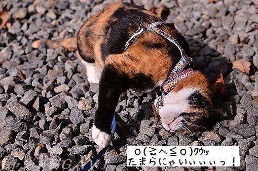 131101_7485.jpg