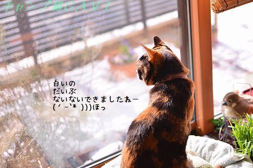 140209_2696.jpg
