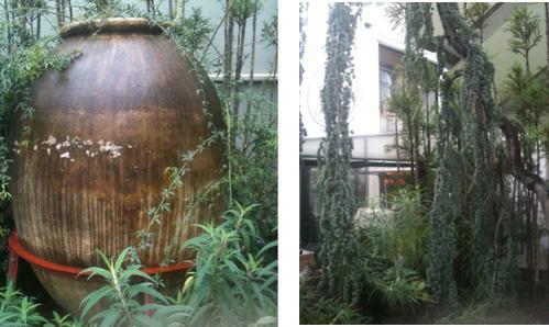 500x 杉と壺