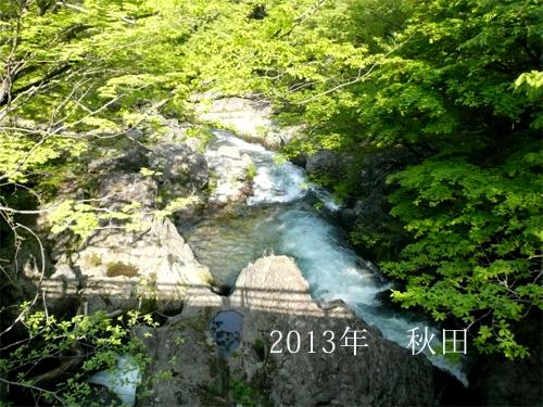 akita2013no1.jpg