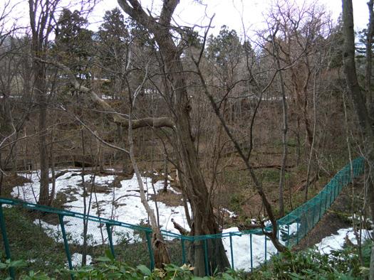 円山動物園の森