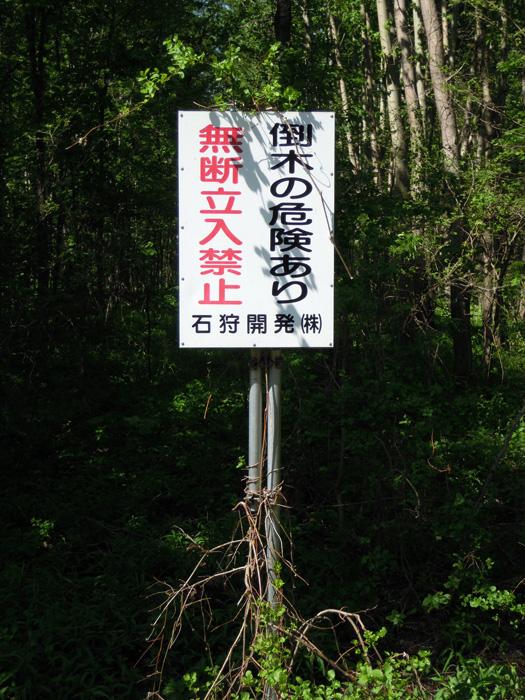 オオバナノエンレイソウの群生地は立入禁止です。