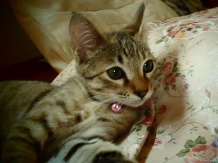 猫ども (2)