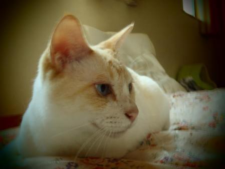 猫ども (1)