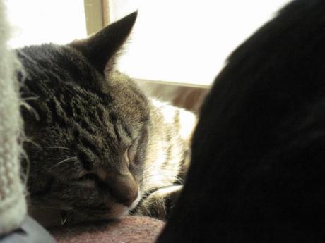 眠い猫と外を見たい猫
