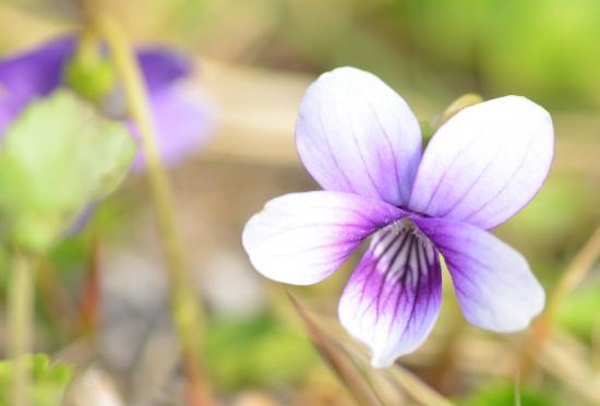 ここまではチョモ撮影13/04/16日