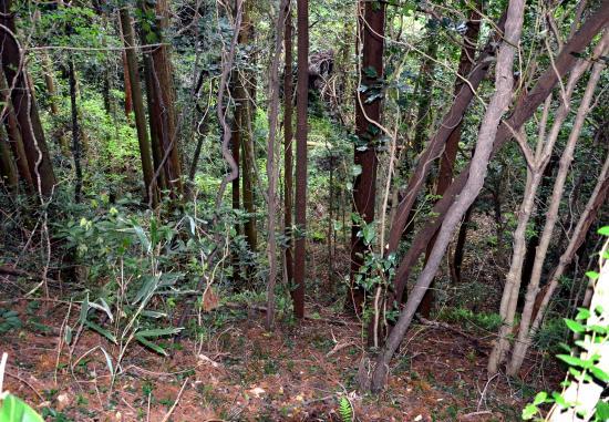 浸食され木が生い茂った 小穴火口床