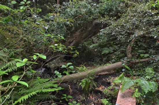 松ノ窪上部に12世紀野増層1起源の二つのスコリア丘があり下の丘から流れ出た...