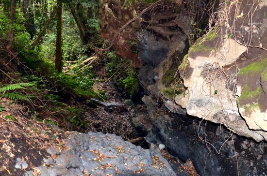 沢の周囲はうっそうとした大樹で 薄暗く神秘的な雰囲気が漂っている(島の史跡-続大島編)