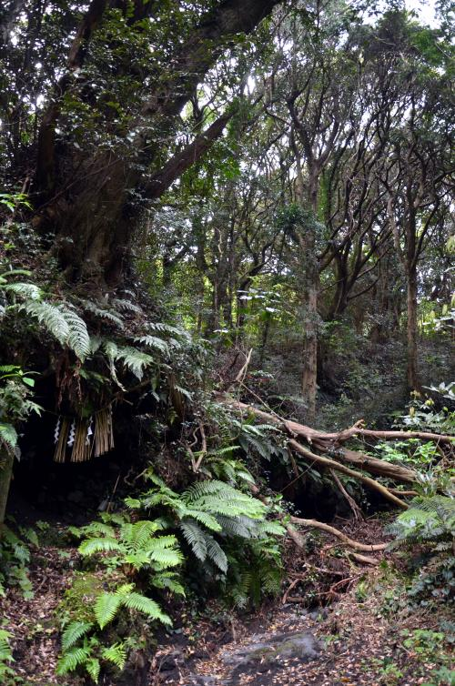 右岸にシイの大木があり根の下が洞になって...二十三夜様が...