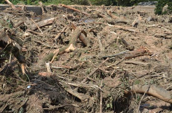 ごぼう根が地滑り防止になるのですが