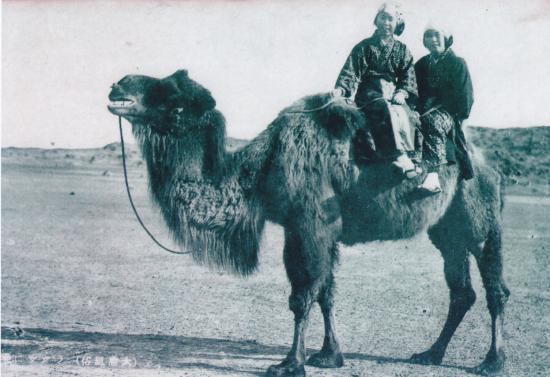1931年(昭和6)駱駝2頭 ロバ11頭が三原に導入