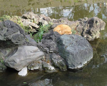 池のそばで寝る