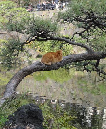 池の上の木で寝る