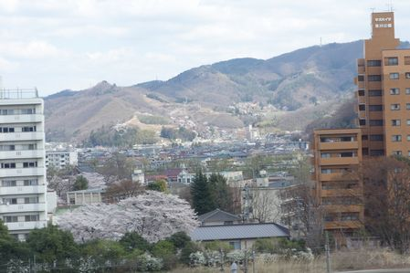 福島の桜は満開
