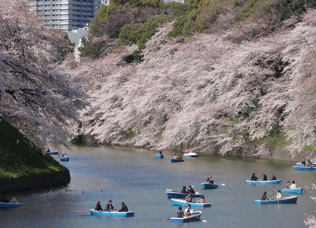 桜の千鳥ヶ淵