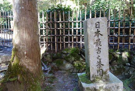 日本最古之茶園