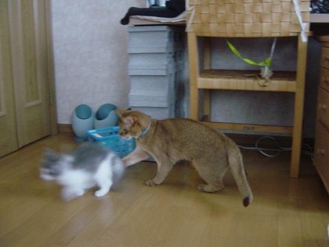いちにち遅れのお迎え記念日02(2009.01.10)