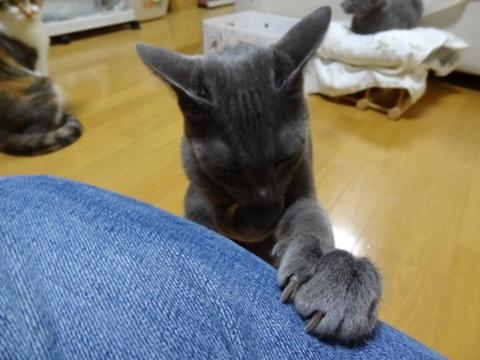 お手手12(2013.12.03)
