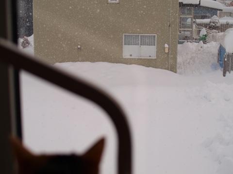 雪見0(24014.01.05)