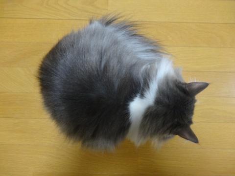 ハコスキーの気持ち01(2014.01.22)