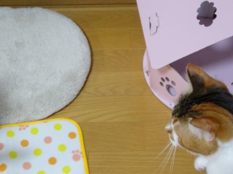 撫子ハウズィングの営業活動08(2014.02.05)