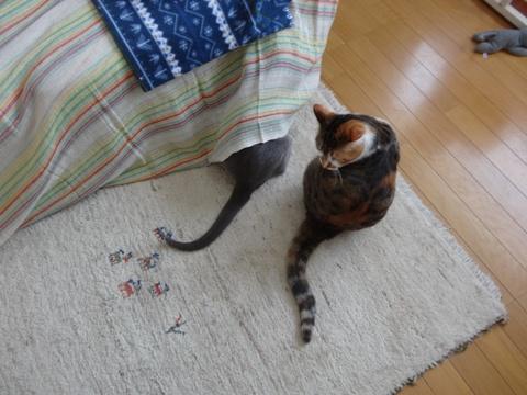 ニコライくんのひとり遊び05(2014.02.08)