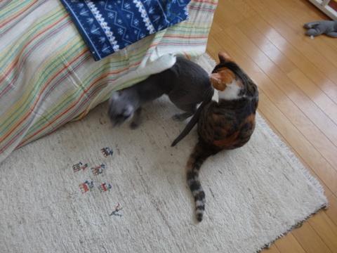 ニコライくんのひとり遊び06(2014.02.08)