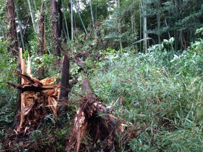 台風26号の被害2